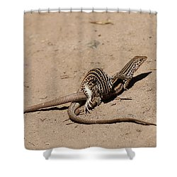 Lizard Love Shower Curtain