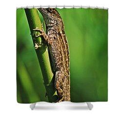 Lizard Shower Curtain by Michael Peychich