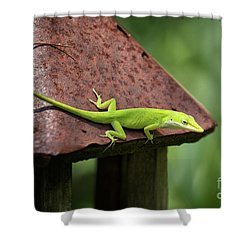 Lizard On Lantern Shower Curtain by Stephanie Hayes