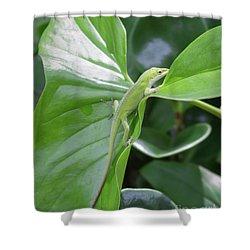 Lizard Waimea Trail Shower Curtain