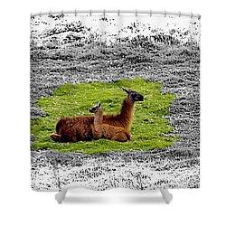 Llamas At Ingapirca Shower Curtain
