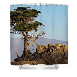 Lone Cypress Tree  Shower Curtain