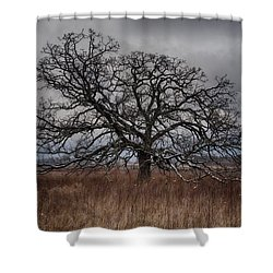 Loan Oak II Shower Curtain by Dan Hefle