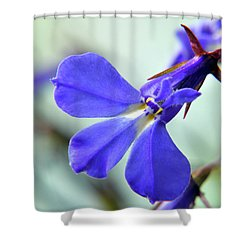 Shower Curtain featuring the photograph Lobelia Erinus by Terence Davis