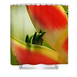 Lobster Claw Flower Shower Curtain