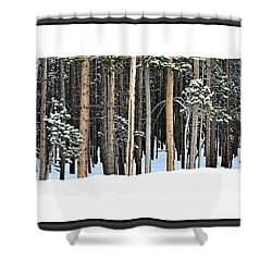 Lodge Pole Pine Shower Curtain