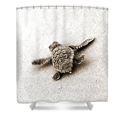 Loggerhead Shower Curtain by Michael Stothard