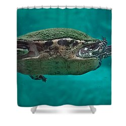 Loggerhead Plastron Shower Curtain by DigiArt Diaries by Vicky B Fuller