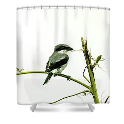 Shower Curtain featuring the photograph Loggerhead Shrike And Mantis by Robert Frederick