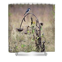 Loggerhead Shrike On Wilted Sunflower Shower Curtain