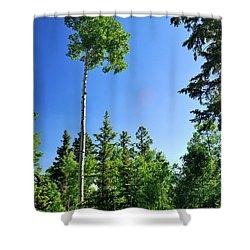 Lone Aspen Shower Curtain