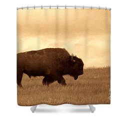 Lone Bison  Shower Curtain by American West Legend By Olivier Le Queinec