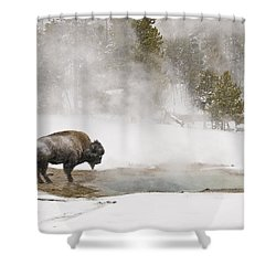 Shower Curtain featuring the photograph Bison Keeping Warm by Gary Lengyel