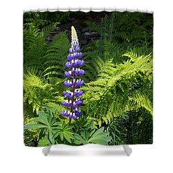 Lone Blue Lupine Shower Curtain by Allan Levin