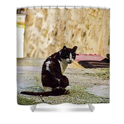 Lone Cat Shower Curtain