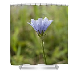 Lone Chicory Blossom Shower Curtain
