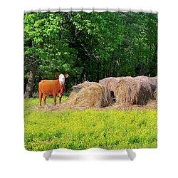 Lone Cow Guard, Smith Mountain Lake Shower Curtain