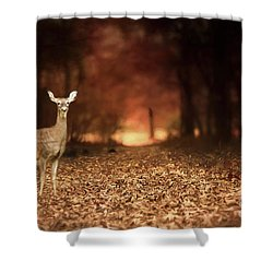 Shower Curtain featuring the photograph Lone Doe by Darren Fisher