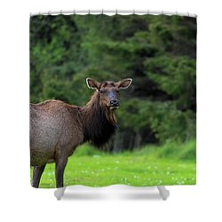 Lone Elk At Ecola State Park Shower Curtain