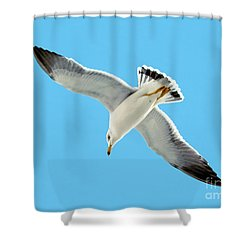 Lone Florida Seagull On Beach Patrol 727b Shower Curtain