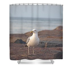 Shower Curtain featuring the photograph Lone Gull by  Newwwman