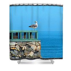 Lone Sea Gull Shower Curtain by Doreen Whitelock