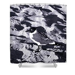 Lone Seagull Shower Curtain