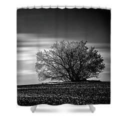 Shower Curtain featuring the photograph Lone Tree by Dan Jurak