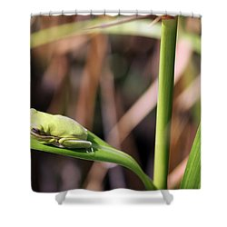 Lone Tree Frog Shower Curtain