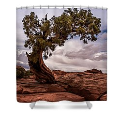 Lone Tree Shower Curtain by Jay Stockhaus