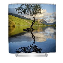 Lone Tree, Llyn Padarn Shower Curtain