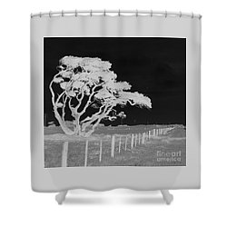 Lone Tree, West Coast Shower Curtain