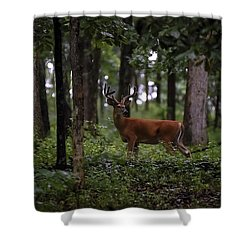 Lone Whitetail Shower Curtain