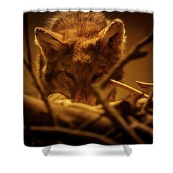 Lone Wolf In The Museum Shower Curtain