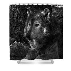 Lone Wolf Shower Curtain by Karol Livote