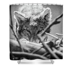 Lone Wolf Of The Smithsonian II Shower Curtain