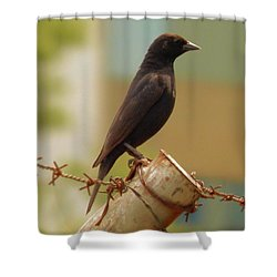Loneliness Bird Shower Curtain