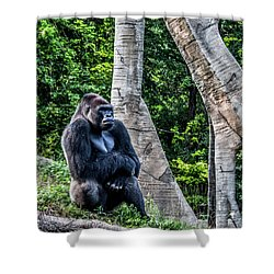 Shower Curtain featuring the photograph Lonely Gorilla by Joann Copeland-Paul