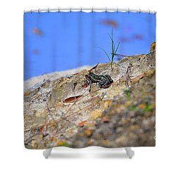 Shower Curtain featuring the photograph Lonely Leopard by Al Powell Photography USA