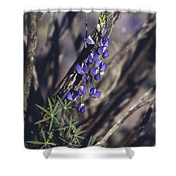 Lonely Lupine Shower Curtain