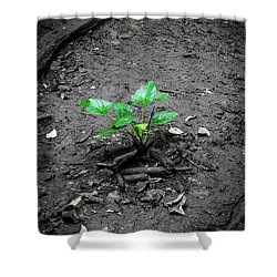 Lonely Plant Shower Curtain