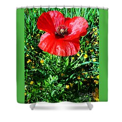 Lonely Poppy Shower Curtain by Don Pedro De Gracia