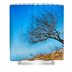 Lonely Tree Blue Sky Shower Curtain