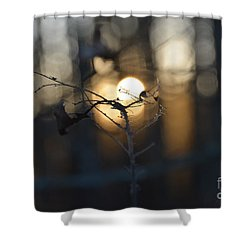 Lonely Tree Branch With Bokeh Love -georgia Shower Curtain