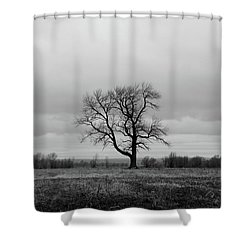 Lonely Tree In A Spring Field Shower Curtain by GoodMood Art