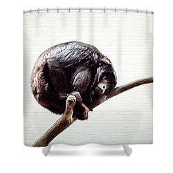 Lonely Urban Chimpanzee  Shower Curtain by Tracie Kaska