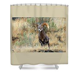 Loner IIi Shower Curtain by Steve Warnstaff