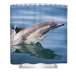 Long Beaked Common Dolphin Shower Curtain