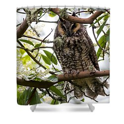 Long-eared Owl Shower Curtain by David Gn