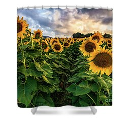Long Island Sunflowers  Shower Curtain